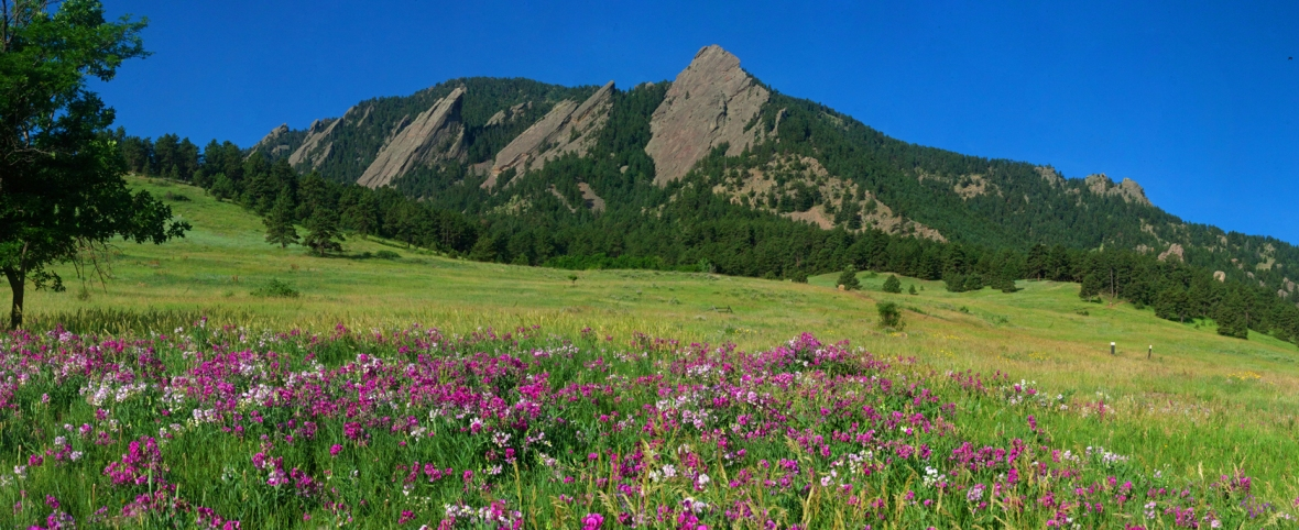 Summer Flatirons with Pink Flowers (12x5) @ 140dpi